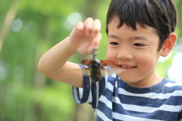 男の子ママは覚悟して! カブトムシにバッタ、家で虫を飼う際に知っておきたいこと! ~都会のママ友ルール第11弾~